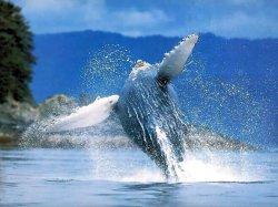Закрылась выставка, посвященная проблемам экологии Мирового океана