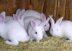 Кролиководнический комплекс